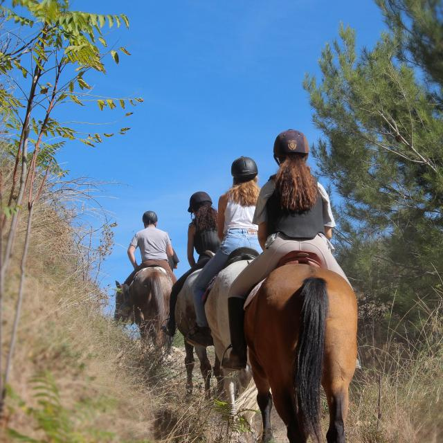 Equitation Sport Cavalier Pinède Balade La Provence A Cheval Oti Aubagne