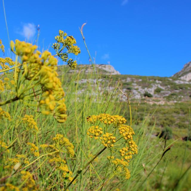 Fleurs Massif De L'etoile Nature Oti Aubagne