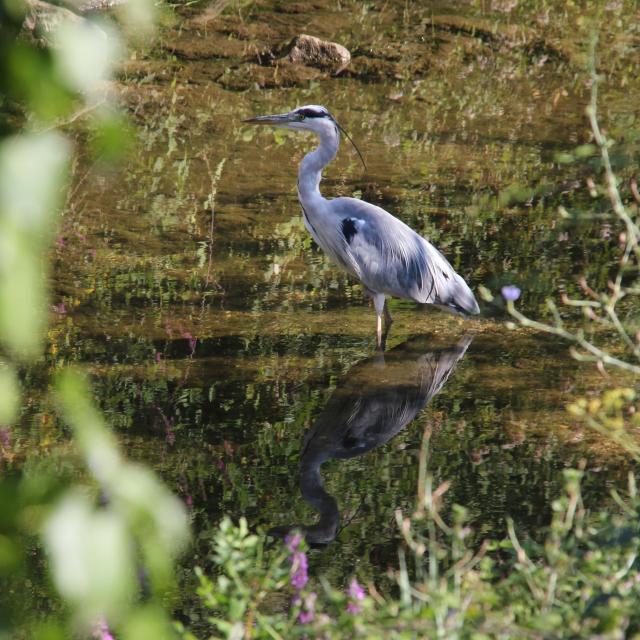 Heron Huveaune Nature Oti Aubagne