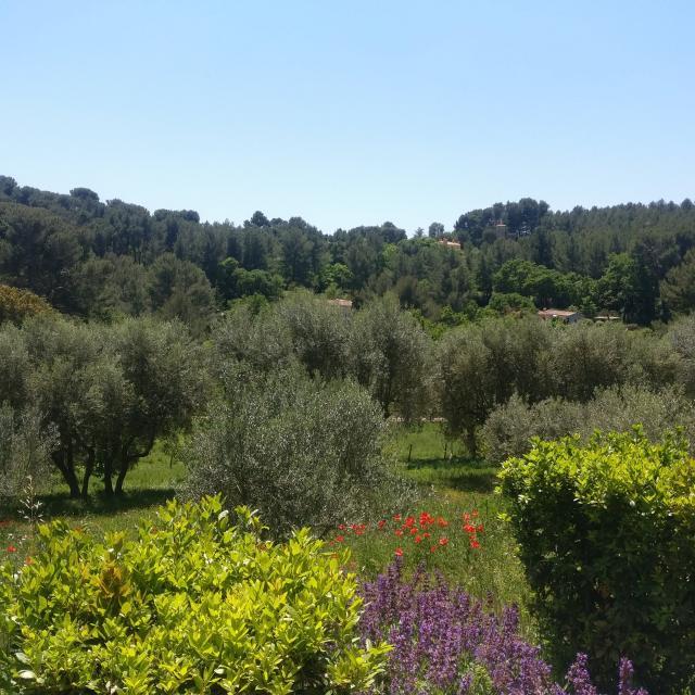 Flore Oliviers Plantes Domaine De La Font De Mai Oti Aubagne