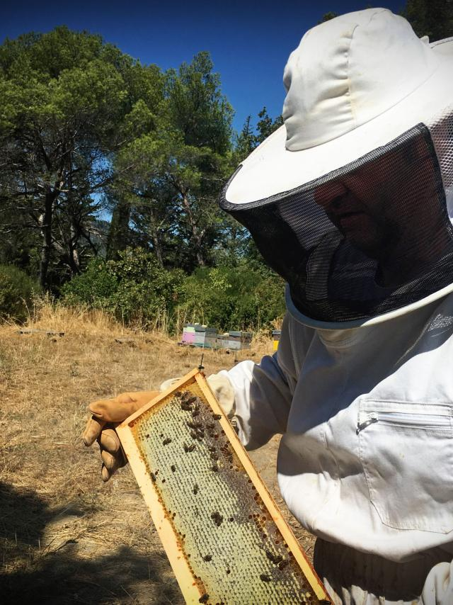 Miel apiculteur - Pays d'Aubagne
