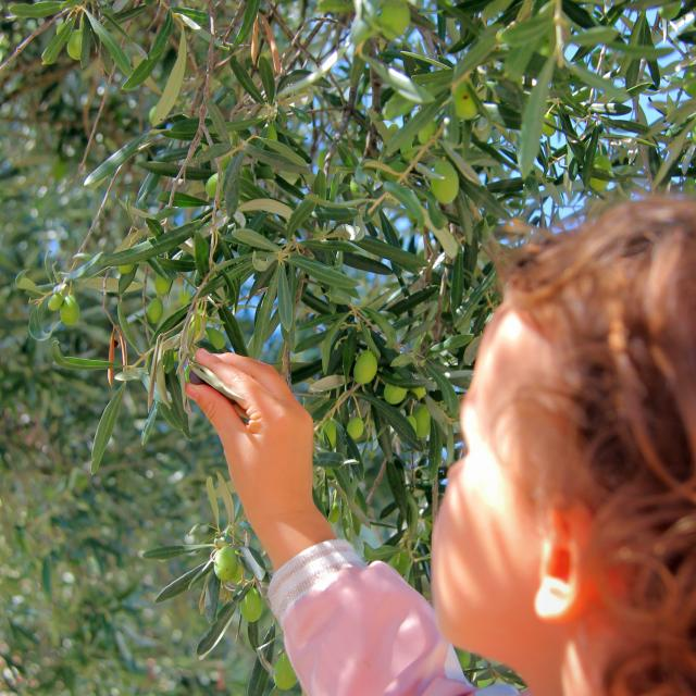olives-main-olivier-cadolive-oti-aubagne-scaled.jpg